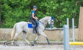 Osmiletý valach vhodný na vytrvalost nebo aktivní rekreaci